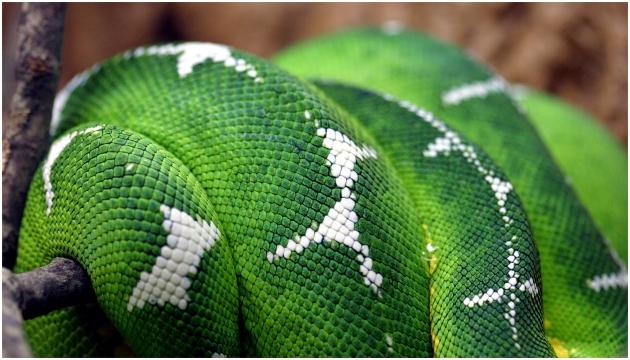 Detail of snake